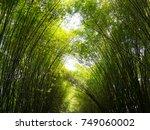 bamboo forest   wat... | Shutterstock . vector #749060002