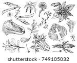 vegetable salad  illustration... | Shutterstock .eps vector #749105032
