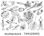 vegetable salad  illustration... | Shutterstock .eps vector #749105092