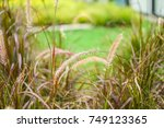 beautiful grass   flower grass  ... | Shutterstock . vector #749123365