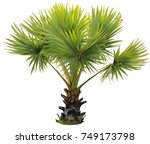 young betel palm on isolate...   Shutterstock . vector #749173798