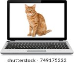 Cute Cat On Laptop Screen. 3d...