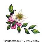 watercolor botanical... | Shutterstock . vector #749194252