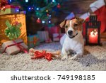 dog jack russel under a... | Shutterstock . vector #749198185