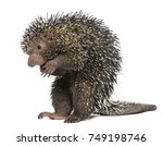 brazilian porcupine  coendou... | Shutterstock . vector #749198746