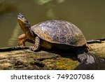a river turtle on a log in... | Shutterstock . vector #749207086