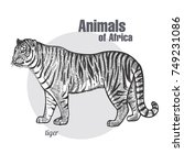tiger hand drawing. animals of... | Shutterstock .eps vector #749231086