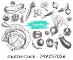 set of vegetables. hand drawn.... | Shutterstock .eps vector #749257036
