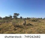 moremi wildlife reserve ... | Shutterstock . vector #749262682