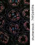 margarites blossom transversely ...   Shutterstock . vector #749264596