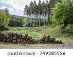 logging at forest clearing | Shutterstock . vector #749285536