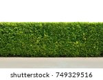 green tree wall fence with... | Shutterstock . vector #749329516