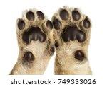 Close Up Of Lion Cub's Pads  4...