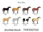 horse color chart set.  equine... | Shutterstock .eps vector #749350765