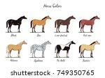 horse color chart set.  equine... | Shutterstock .eps vector #749350765