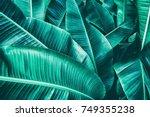 tropical banana leaf texture ... | Shutterstock . vector #749355238