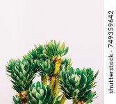 outdoors. minimal fashion... | Shutterstock . vector #749359642