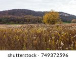 uncultivated agriculture field... | Shutterstock . vector #749372596