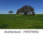 colorful landscape  pampas ...   Shutterstock . vector #749374552