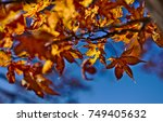 Small photo of Golden mean composition of golden foliage of maple leaves against blue sky