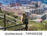 Gibraltar  Monkey Rock  A...