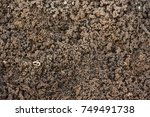 root worm on river sand  | Shutterstock . vector #749491738