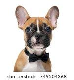 French Bulldog Puppy Wearing A...