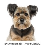 Stock photo close up of a crossbreed years old 749508502