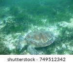 turtle at green island  great...   Shutterstock . vector #749512342