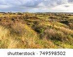 Dutch Dune Landscape Kraansvla...