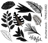 black icons of leaves of... | Shutterstock .eps vector #749615482