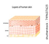 layers of skin. epidermis ... | Shutterstock .eps vector #749637625