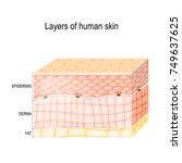 layers of skin. epidermis ... | Shutterstock .eps vector #749637625