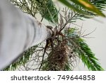 tree trunk close up of... | Shutterstock . vector #749644858