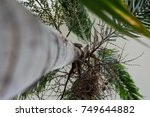 tree trunk and leaf of... | Shutterstock . vector #749644882