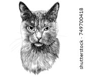 cat head sketch vector graphics ... | Shutterstock .eps vector #749700418