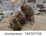 japanese macaques  snow monkey... | Shutterstock . vector #749707738