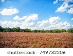 Small photo of Heathland with flowering common heather (Calluna vulgaris) and an oak in the Lueneburg Heath (Lueneburger Heide) in Lower Saxony, Germany. Autumn field and meadow concept