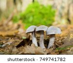 mushrooms in autumn forest... | Shutterstock . vector #749741782