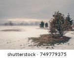 isolated shrub bush in nature... | Shutterstock . vector #749779375
