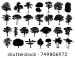 isolated black  tree... | Shutterstock . vector #749806972