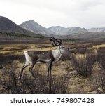 deer looking over at the... | Shutterstock . vector #749807428