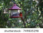 beautiful bright red male... | Shutterstock . vector #749835298