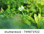 green leaf in sunlight | Shutterstock . vector #749871922