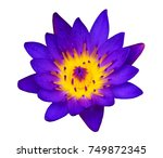 lotus flower on white... | Shutterstock . vector #749872345