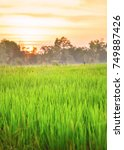 rice field at sun set | Shutterstock . vector #749887426