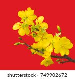 blooming apricot branch with... | Shutterstock . vector #749902672