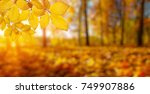autumn leaves on the sun and... | Shutterstock . vector #749907886
