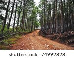 Hdr Photo Of A Dirt Road In Th...