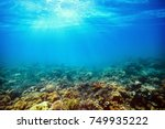 underwater coral reef on the... | Shutterstock . vector #749935222